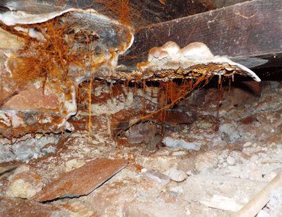 Dry Rot Found in sub floor