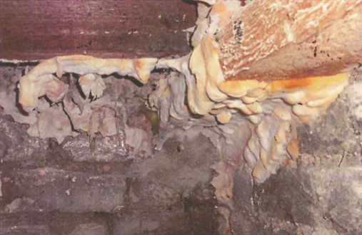 Dry Rot and Damp Proofing treatments 2
